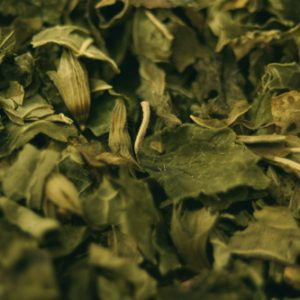 Lemon Balm (Melissa) Tea