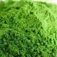 Brocolli Powder